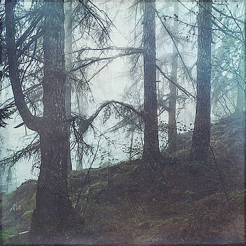 Damp Forest by Dirk Wuestenhagen