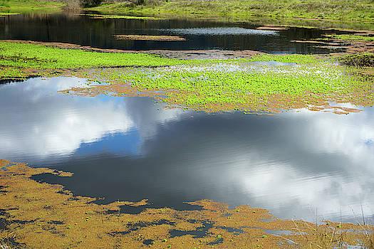 Damselfly Pond - 19 4497 by Tari Kerss