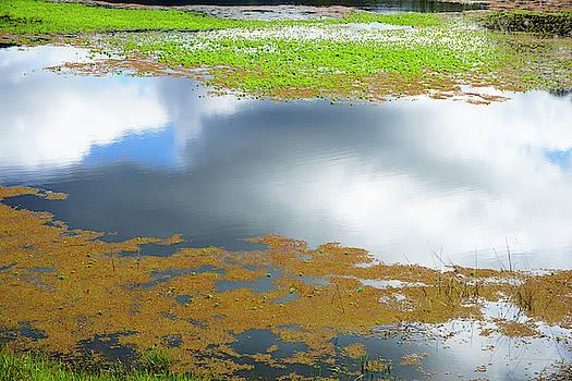 Damselfly pond - 19 4498 by Tari Kerss