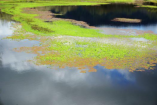 Damselfly Pond - 19 4503 by Tari Kerss