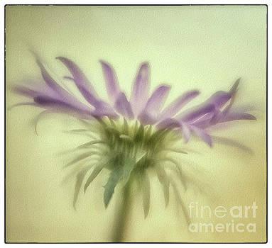 Natural Abstract Photography - Dancing Tahoka