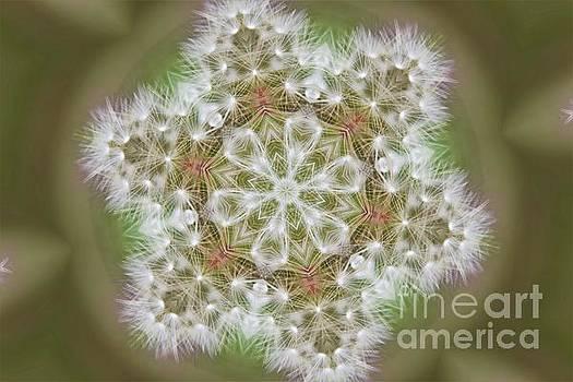 Dandelion Snowflake by Angela Stafford