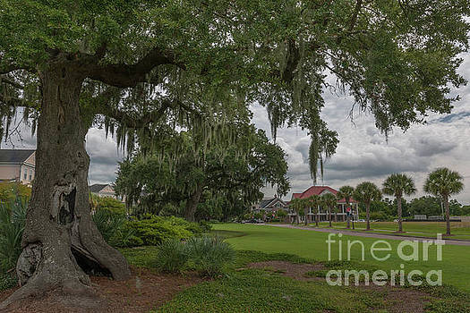 Daniel Island - Southern Live Oak Tree by Dale Powell