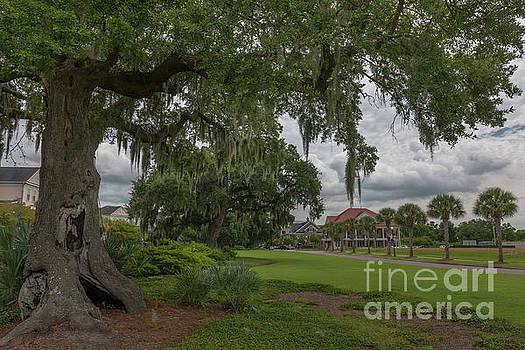 Dale Powell - Daniel Island - Southern Live Oak Tree