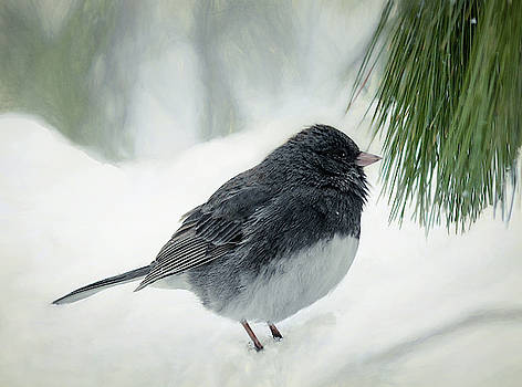 Dark Eyes - Junco  by Mary Lynn Giacomini