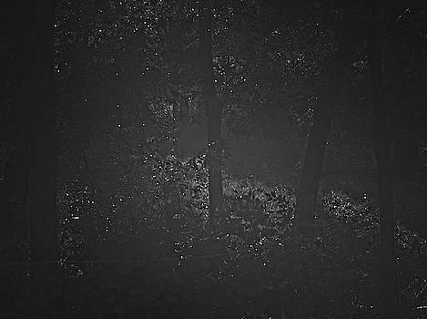 Dark Steamy Woods by Philip A Swiderski Jr
