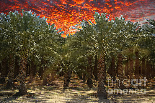 Date Palms by Sherry Little Fawn Schuessler