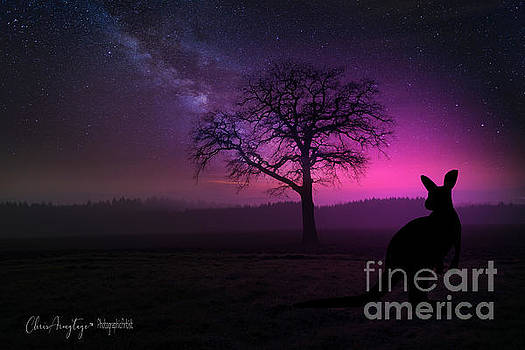 Dawn by Chris Armytage