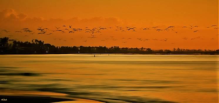 Dawns Arrival the Birds by John R Williams