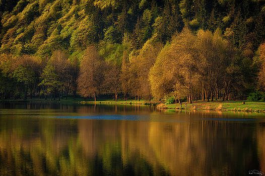 Dawn's light along a lakes shore by Dee Browning