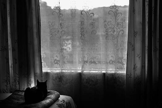 Day Dreaming Cat by Vladan Radulovic