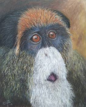 De Brazza's monkey by Elin Johnsen