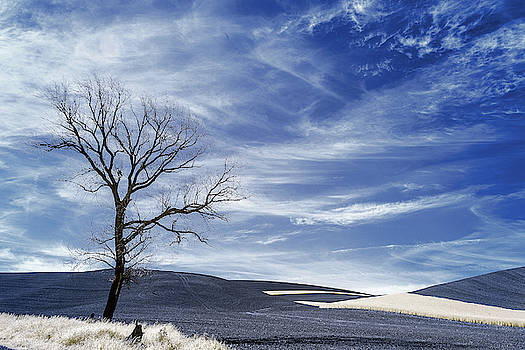 Dead Tree in the Palouse by Jon Glaser