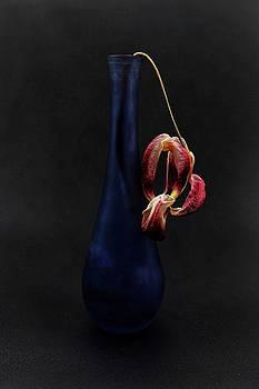 Dead Tulip by John Rodrigues