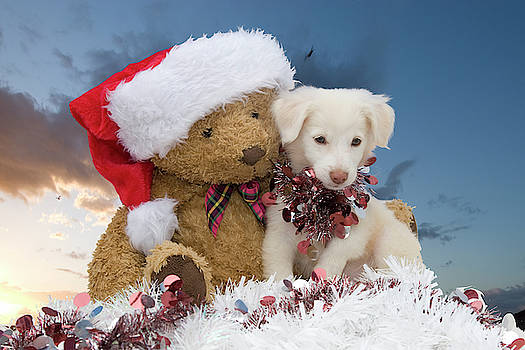 Christmas Rescue Pup by Nikki Attree