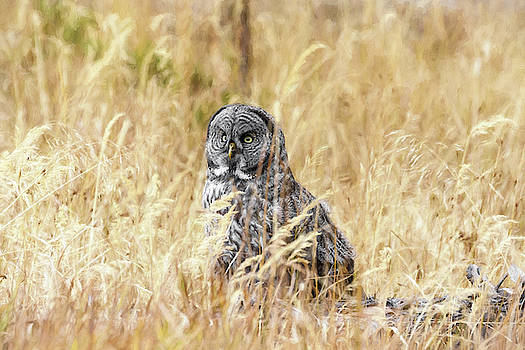 Deep Grass Hunting by Wes and Dotty Weber