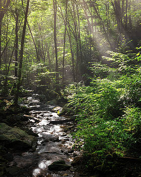 Deep In The Forrest - Sun Rays by Mike Koenig