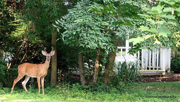 Deer at Wayside by Jonathan Jackson Coe