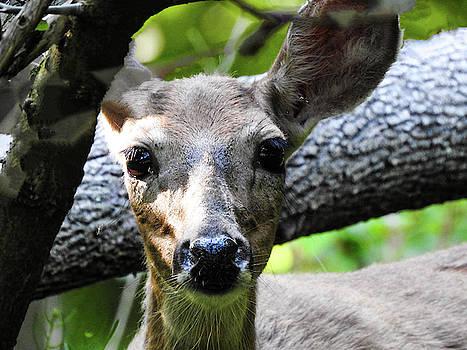 Deer Eyes by Kathy Gail