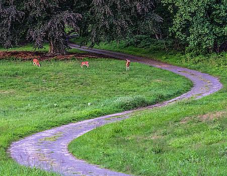Deer Family by Jeffrey Friedkin