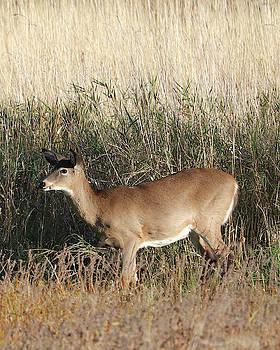 Deer In Tall Grass by Doris Potter