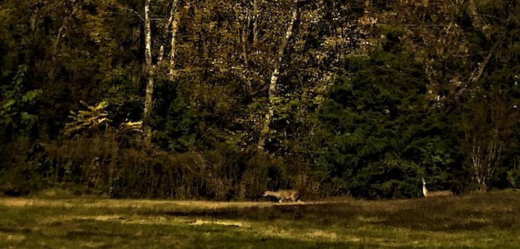 Deer in the Woods by Peggy Leyva Conley
