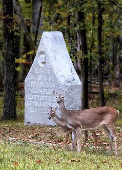 Susan Rissi Tregoning - Deer on the Battlefield