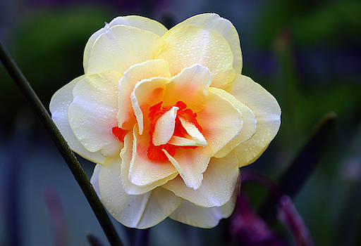 Delicate Flower by Anthony Jones