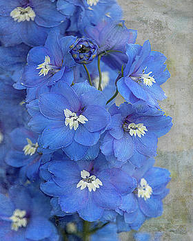 Delightful Delphiniums by TL Wilson Photography by Teresa Wilson