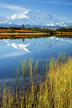 Denali Reflection by Tim Newton