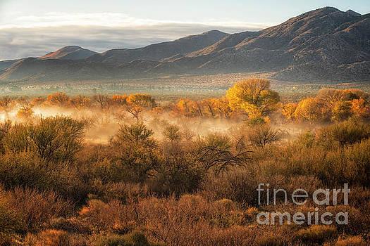 Desert Sunrise by Jennifer Magallon