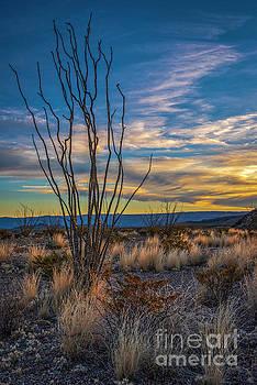 Desert Sunset by Charles Dobbs