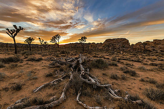 Desert Veins by ChrisAntoniniPhotography
