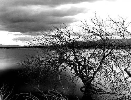 Desolate by Cyndi Hardy