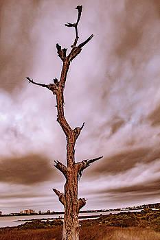 Desolation by Traci Asaurus