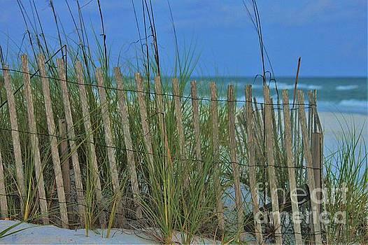 Destin Sand Fence by Angela Stafford