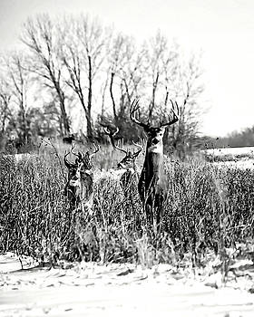 Bucks on the Move - BW by Rick Grisolano Photography LLC