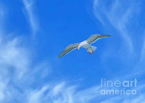 Diann Fisher - Digital Gull In Flight