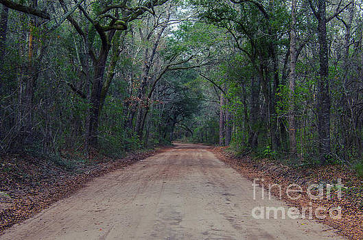 Dirt Road to the Angel Oak Tree in Charleston by Dale Powell