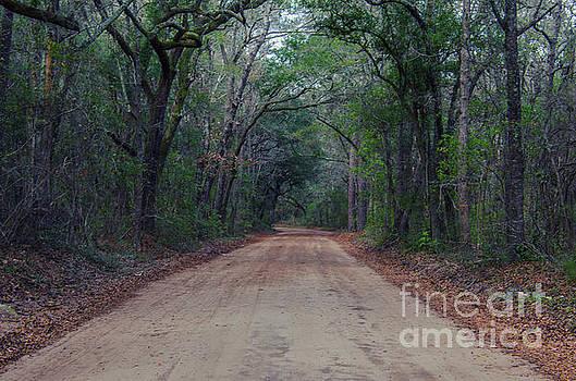 Dale Powell - Dirt Road to the Angel Oak Tree in Charleston