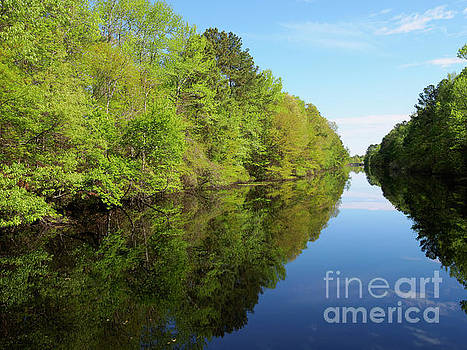 Dismal Swamp Canal in spring by Louise Heusinkveld