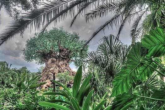 Disney Jungle by Randy Dyer