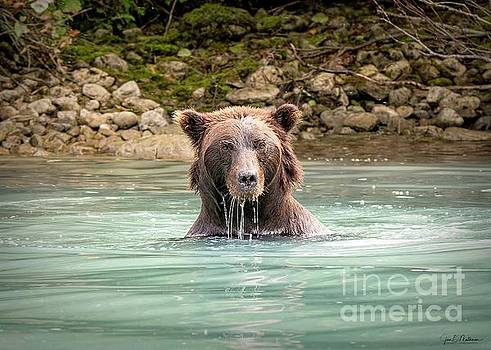 Do Not Mess With Me - Bears by Jan Mulherin