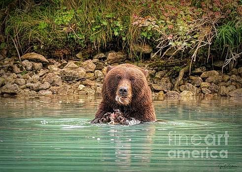 Do You Mind?  - Bears by Jan Mulherin