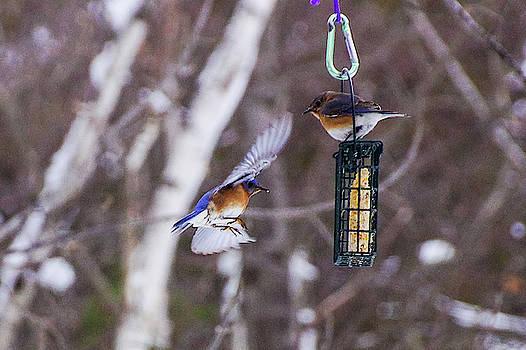 Docking Bluebird by Rockybranch Dreams