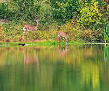 Doe Reflection by Dan Sproul