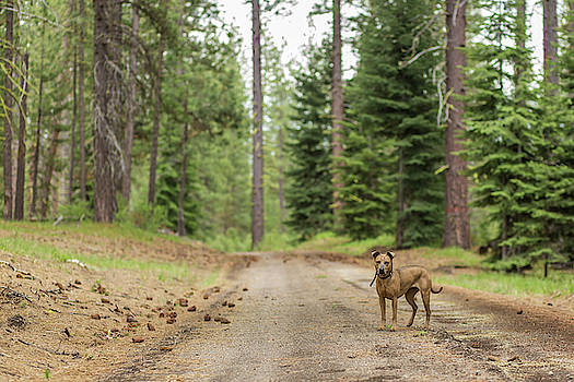 Julieta Belmont - Dog enjoying outside