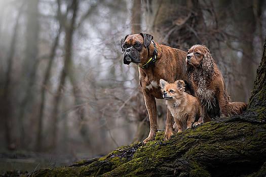 Dog Gang by Tamas Szarka