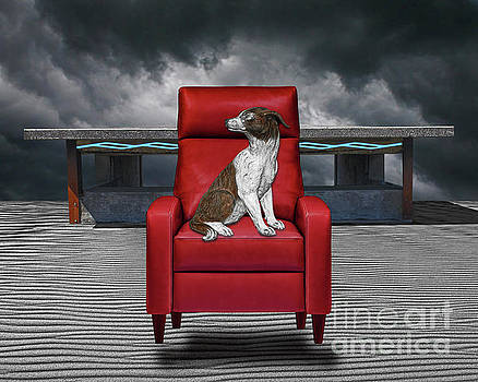 Dog In Chair by Keith Dillon