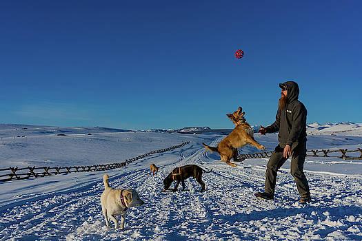 Julieta Belmont - Dog jumping for ball